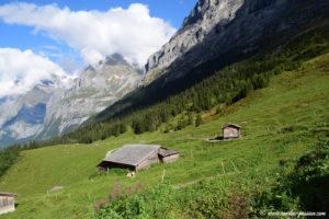 Les alpages d'Alpiglen