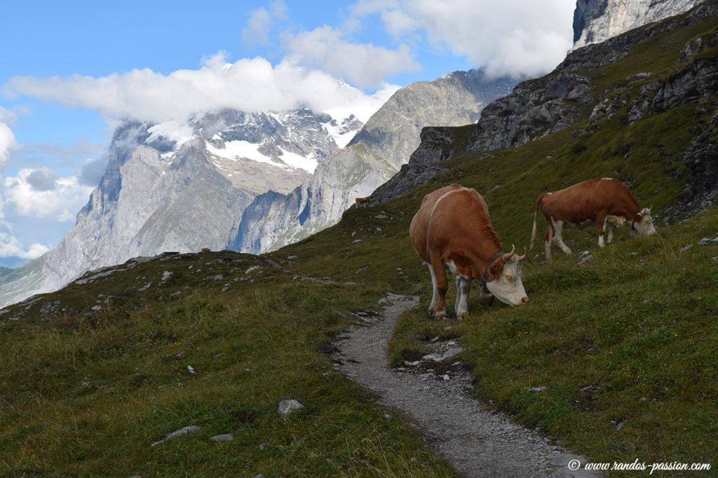 Rencontre sur l'Eiger Trail
