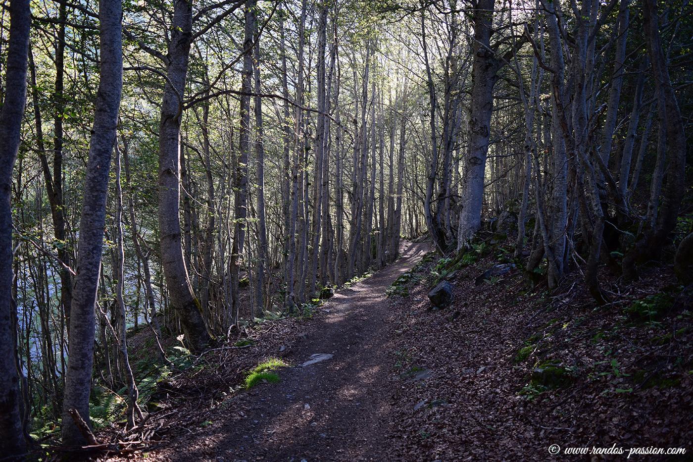 La montée en forêt