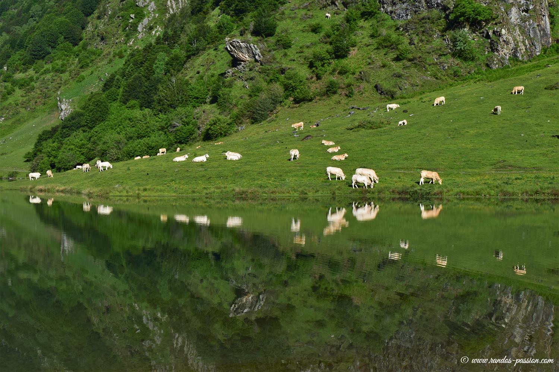 Lac d'Estaing - Val d'Azun - Hautes-Pyréné