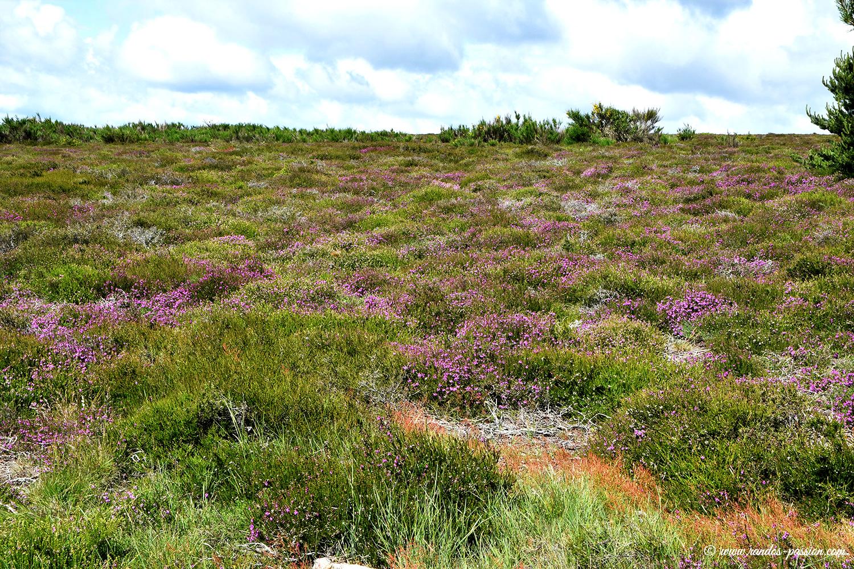 Sur le plateau du Caroux - Hérault