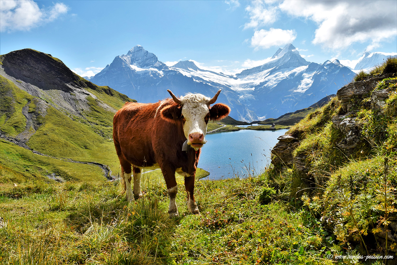Lac de Bachalp - Alpes Bernoises